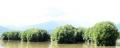 Vành đai xanh của làng biển