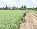 Vĩnh Long:Đã triển khai 10 dự án khuyến nông do tỉnh đầu tư