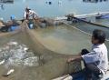 Nuôi trồng thủy sản: Hướng đến tiêu chí an toàn vệ sinh thực phẩm