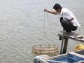 Dịch bệnh trên tôm, cá tra diễn biến phức tạp