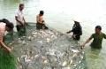 Những kinh nghiệm nuôi cá thâm canh