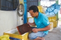 Cà Mau: Thành công từ nghề ương cá bột