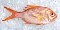 Kỷ thuật của Nhật Bản bảo quản thủy sản sau thu hoạch