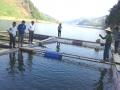 Lai Châu: Phát triển nuôi cá lồng trên lòng hồ thủy điện