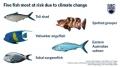 Có hơn 294 loài cá biển bị ảnh hưởng bởi biến đổi khí hậu