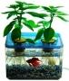 Nuôi cá gì trong hệ thống aquaponics?