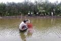 Luân canh tôm - lúa trên đất phèn nhiễm mặn