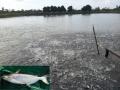 Tập huấn nuôi cá dứa trên ao tôm nước lợ