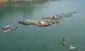 Phát triển thủy sản - thúc đẩy chuyển dịch cơ cấu kinh tế