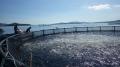 Mô hình nuôi thủy sản bằng lồng nhựa theo công nghệ Na Uy