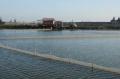 Hải Dương: Cá rô phi lai xa cho thu lãi 35 - 40 triệu đồng/ha