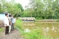 Tổ hợp tác nuôi tôm quảng canh cải tiến ít thay nước ở Cà Mau