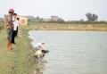 Quảng Trị: Triển khai mô hình nuôi ghép tôm sú - cua và cá đối mục trong ao