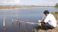 Mô hình tôm - lúa ở Bạc Liêu: Làm tốt dự án, ngại ngần áp dụng