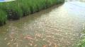 Myanmar: Lợi nhuận từ nuôi ghép thủy sản