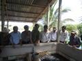 An Giang: Mở lớp dạy nuôi lươn thương phẩm