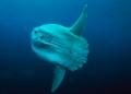 Một lượng lớn cá bị lãng quên dưới biển sâu