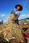 Cuộc thi ảnh Đất & Người: Được mùa cá trích