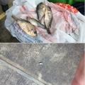 Mưa cá trút xuống Mexico