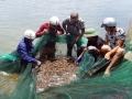 Quảng Ninh: Được mùa vụ tôm đông xuân