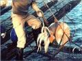 Khoảng 200.000 tấn mực được đánh bắt trong vùng biển mới