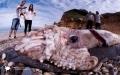 Thủy quái mực dài gần 10m, nặng 181,4kg