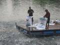 Cơ hội thay đổi ngành nuôi cá tra