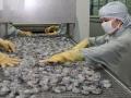 Indonesia thành nước sản xuất tôm lớn nhất thế giới