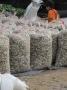 Nam Định: Giao Thủy phát triển thương hiệu ngao sạch
