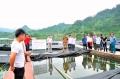 Nghề nuôi cá lồng ở Na Hang