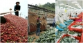 Nghịch lý xuất khẩu Việt Nam: Khối lượng lớn nhưng giá trị rất thấp