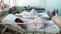 8 người nhập viện do ăn phải cá nóc độc