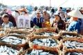 Quảng Bình phục hồi nuôi trồng thủy sản sau sự cố môi trường biển