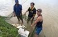 """Người đầu tiên """"hóa giòn"""" cá chép ở Quảng Trị"""
