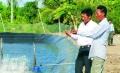 Cà Mau: Giá tôm nguyên liệu giảm, người nuôi tôm gặp khó