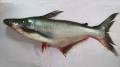 Natri betonic - Nguyên liệu trị bệnh mới trên cá da trơn