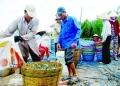 Những lưu ý để nuôi tôm an toàn thực phẩm