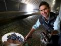 Tìm thấy thức ăn mới cho bào ngư từ phụ phẩm rượu vang