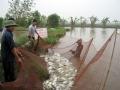 Nhà khoa học về xã đối thoại với các hộ nuôi trồng thủy sản