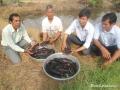 Bạc Liêu: Nông dân ở Hồng Dân khá lên nhờ nuôi cá bống tượng