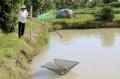 Cà Mau: Nông dân lo giá cábống tượng, cá chình bấp bênh