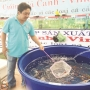 TP.Hồ Chí Minh: Lạc quan với tăng trưởng xuất khẩu cá cảnh
