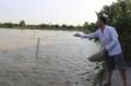 Mô hình nuôi cá chép lai hiệu quả cao tại Liên Châu (Hà Nội)