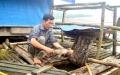 Dùng cây tre, ống nhựa nuôi cá chiên đặc sản