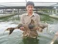 Hà Giang: Người dân Bắc Quang phát triển nuôi cá chiên