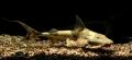 Hà Giang: Thu nhập cao từ nuôi cá lồng trên sông Gâm