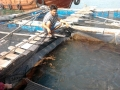 Quảng Ninh: Hiệu quả mô hình nuôi cá chim vây vàng bằng thức ăn công nghiệp