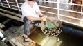 Trúng mùa cá cuối năm, nông dân Đồng Nai ăn Tết to
