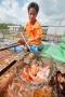 Đồng Tháp: Liên kết nuôi cá điêu hồng