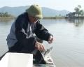 Quảng Ninh nhân giống và nuôi thành công cá đối mục thương phẩm